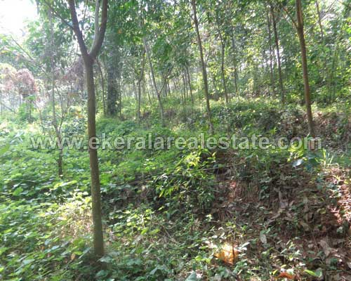 kerala real estate properties Vembayam residential house plot sale in Vembayam