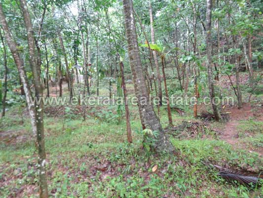 Properties in Kattakada Residential Land in Kallikkad near Kattakada Trivandrum