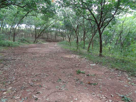 Sreekaryam Real estate Trivandrum 5 acres Rubber Plantation near Pothencode