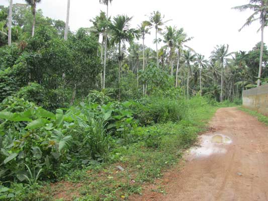 Peyad thiruvananthapuram house plots sale Peyad real estate land sale