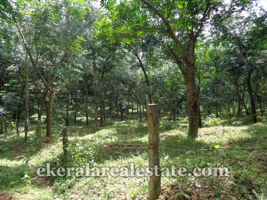 rubber estate for sale in perumkadavila trivandrum perumkadavila real estate