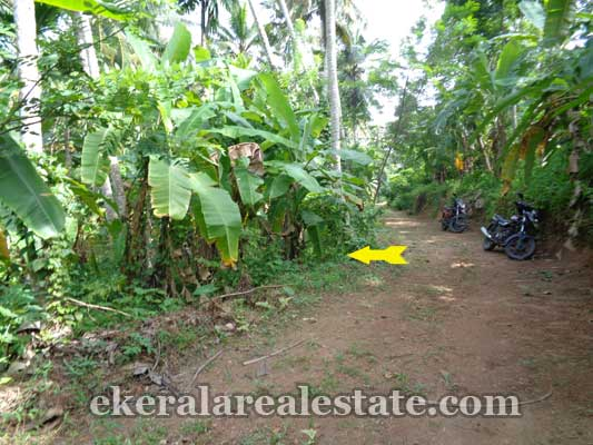 Kuttiyani Vattappara land property for sale in trivandrum kerala