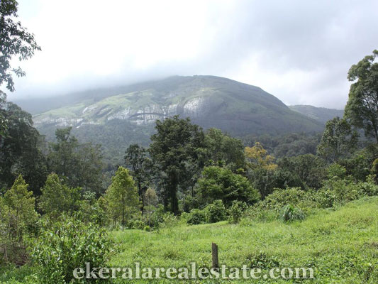 kerala real estate land property sale in Munnar Idukki kerala