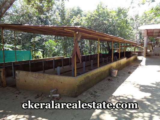 properties-in-trivandrum-dairy-farm-sale-at-venjaramoodu-trivandrum-kerala-real-estate