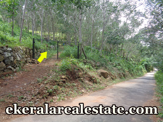 4.75-Acre-Rubber-Plantation-Land-Sale-at-Koottappu-Near-Amboori-Vellarada-Trivandrum-Kerala-Amboori-Real-Estate-Properties-